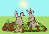 rabbit allotment