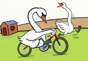 swan outside